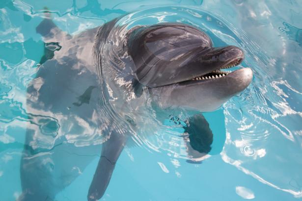 Фотообои дельфин в воде (animals-0000271)