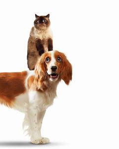 Фотообои Кот и собака (animals-585)