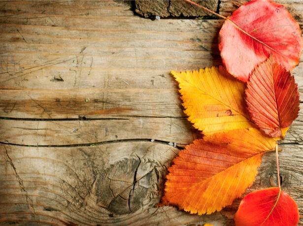 Фотообои листья и деревянные доски (background-0000175)