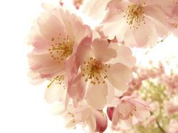 flowers-0000011