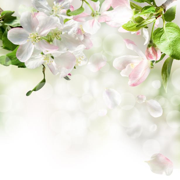 Обои фото лепестки цветов (flowers-0000196)