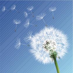flowers-0000247
