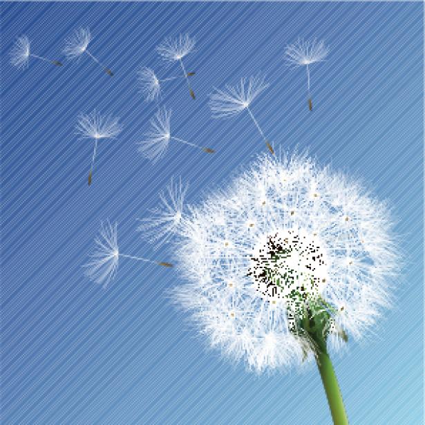 Фото обои цветы Одуванчик (flowers-0000247)