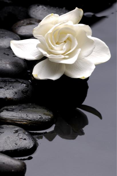 Фото обои на стену камешки и белый цветок (flowers-0000406)