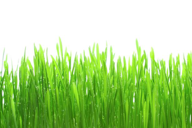 Фото обои на стену зеленая трава (flowers-0000510)