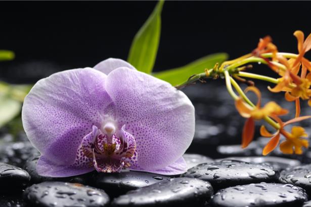 Обои фото цветок орхидея, камешки (flowers-0000552)
