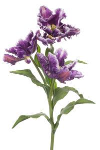 Фотообои Три тюльпана (flowers-740)