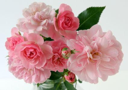Фотообои пионы и бутоны (flowers-775)