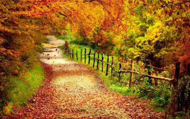 Фотообои с природой дорога в лесу (nature-00092)