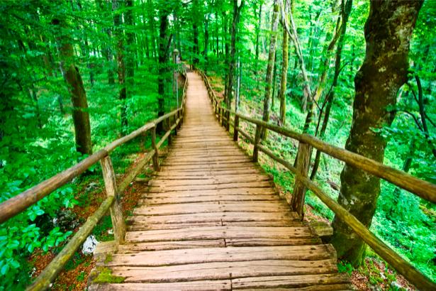 Фотообои природные пейзажи мост в лесу (nature-00159)