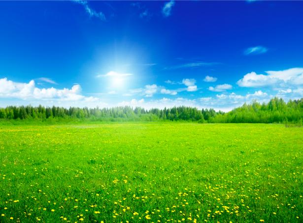 Фотообои летнее поле фото (nature-00334)