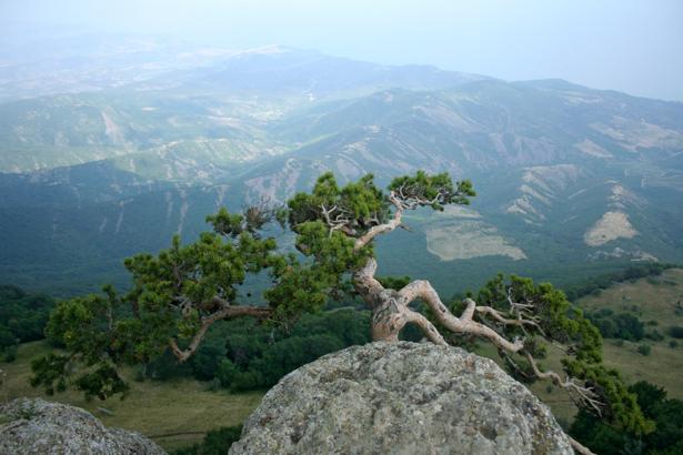 Фотообои сосна в камне горы (nature-00485)