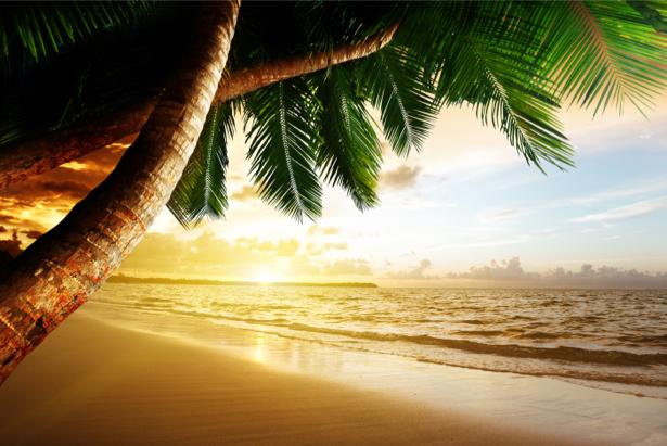 Фотообои морской берег пальмы закат (sea-0000258)