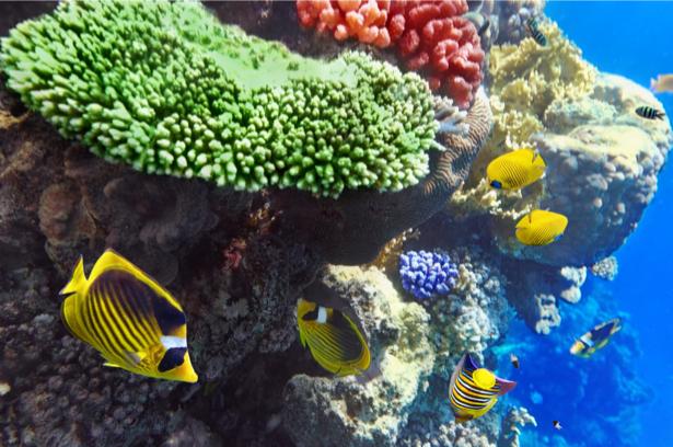Подводный мир, кораллы, рыбки (underwater-world-00152)