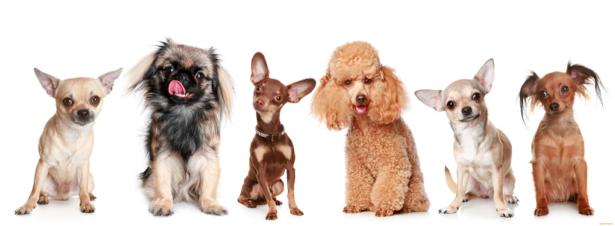 Фотообои собаки в рядок (animals-0000123)