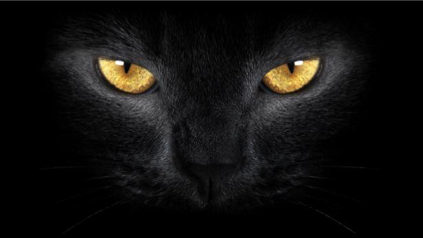 Фотообои черный кот (animals-0000312)