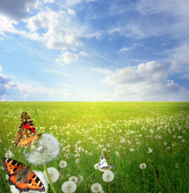 Фотообои бабочки в поле (animals-0000337)