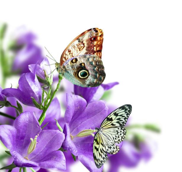Обои фото Лиловые колокольчики (flowers-0000199)