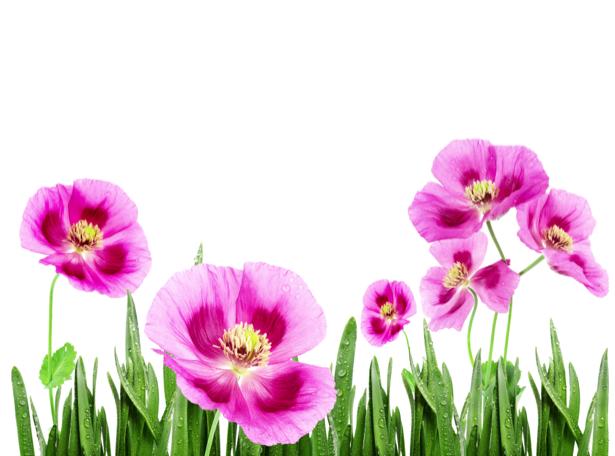Фото обои цветы розовые (flowers-0000504)