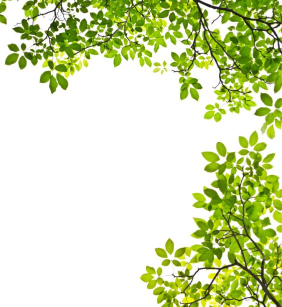Фотообои листва деревьев (nature-0000812)