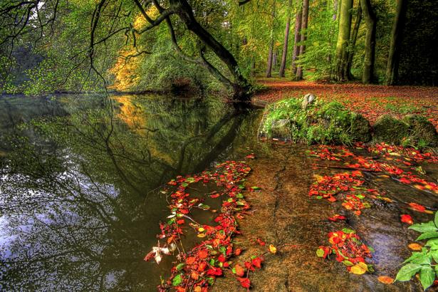 Фотообои виды природы река в лесу (nature-00083)