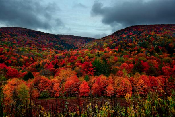 Фотообои с природой лес в горах (nature-00084)