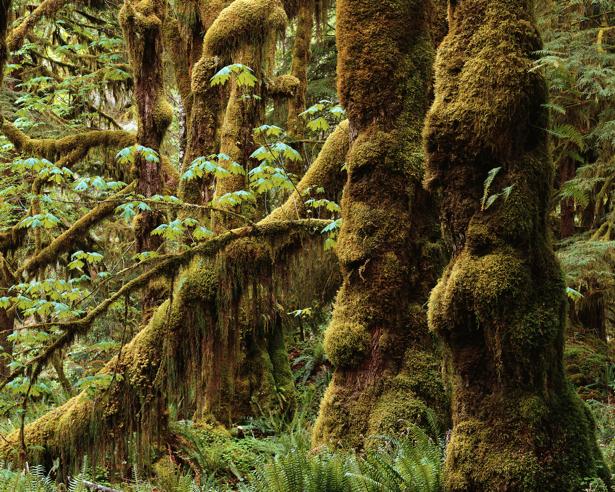 Фотообои лес травка дерево (nature-00217)