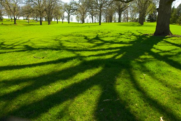 Фотообои лес поляна тень (nature-00243)
