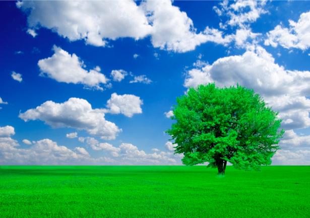 Фотообои поле дерево и небо (nature-00291)