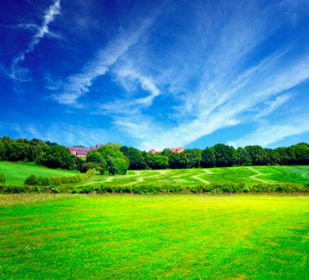 Фотообои фото пейзаж поле (nature-00310)