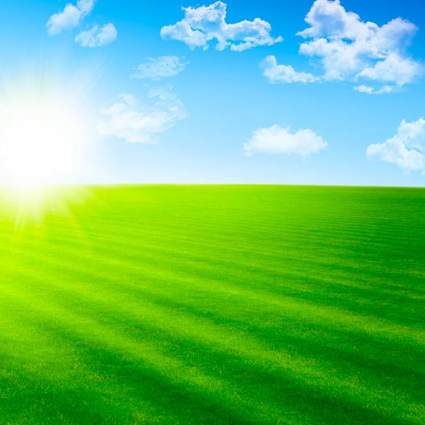 Фотообои поле травы и небо (nature-00333)