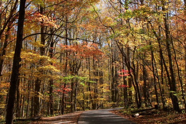 Фотообои дорога в лесу осень (nature-00441)