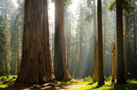 Фотообои Национальный парк Секвойя (nature-880)