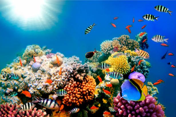 Фотообои ванная подводный мир окиана (underwater-world-00008)