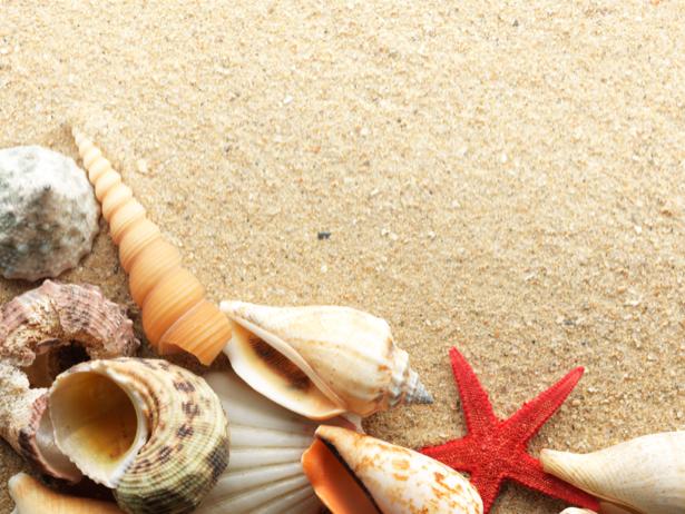 Морские ракушки и красная звезда обои (underwater-world-00077)