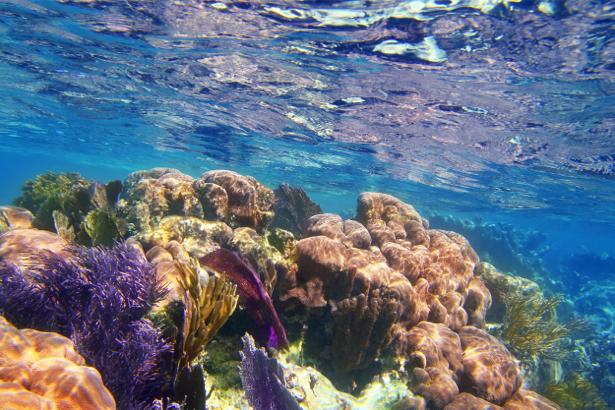 Фотообои для ванны подводные кораллы (underwater-world-00174)