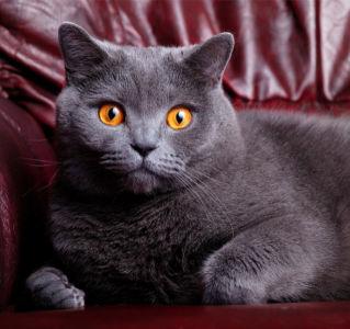 Фотообои кошка на диване (animals-0000246)