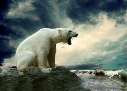 Фотообои белый медведь в океане (animals-0000265)