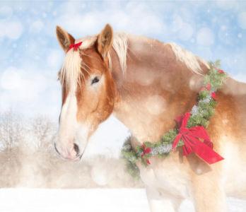 Фотообои лошадь в рождество (animals-0000385)