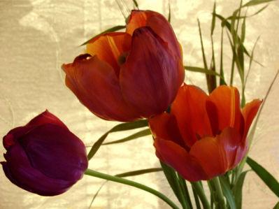 Красные тюльпаны цветы для спальни фото (flowers-0000108)