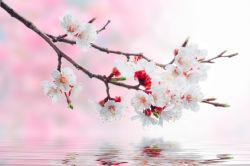 flowers-0000324