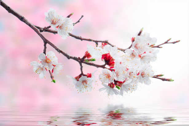 Обои фото Цветущая ветка (flowers-0000324)