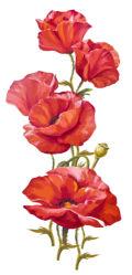 flowers-0000713