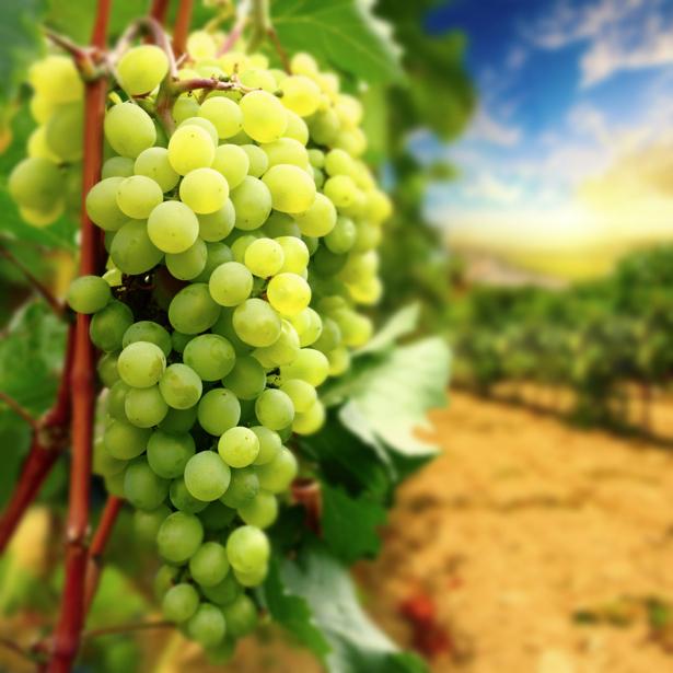Фотообои на кухню гроздь винограда (food-0000221)