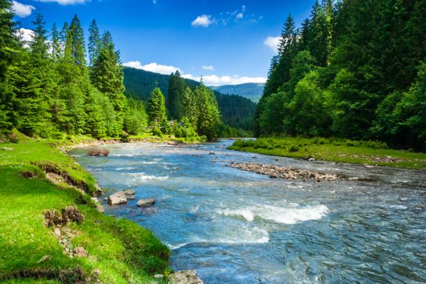 Фотообои лес горная река (nature-0000668)