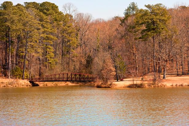 Фотообои с природой река лес (nature-00128)