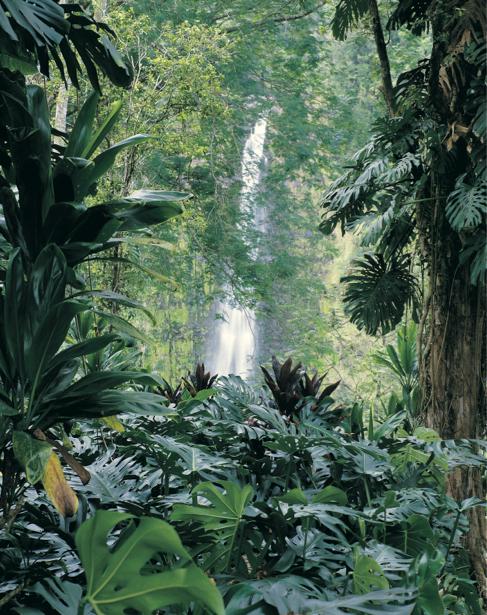 Фотообои водопад лес пальмы (nature-00397)