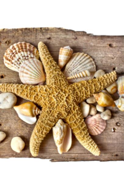 Фотообои раковина звезда (sea-0000098)