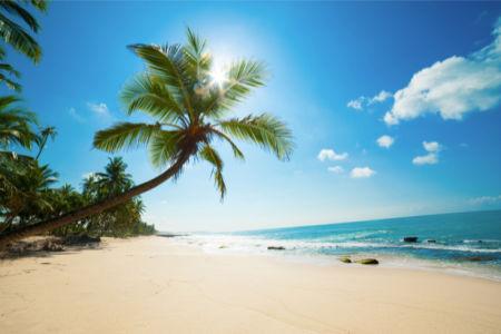 Фотообои солнечное побережье и пальма (sea-0000304)