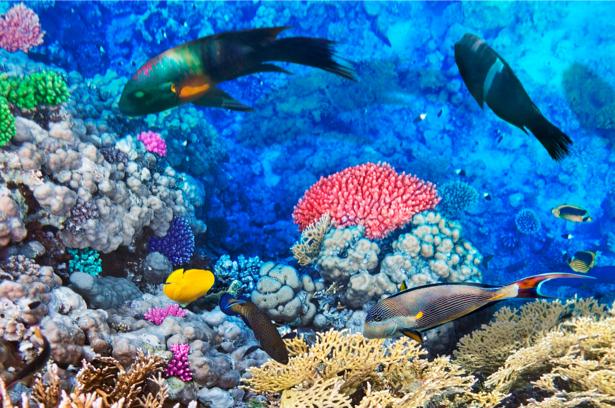 Фотообои коралловый риф рыбки (underwater-world-00037)
